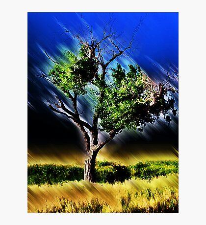 texas tree Photographic Print