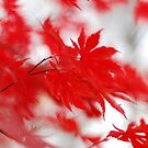 «Red leaves in autumn» de photographyjen