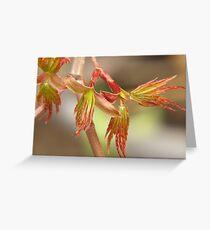 Japanese maple, budding leaves... Greeting Card