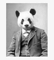 Distinguished Panda Photographic Print