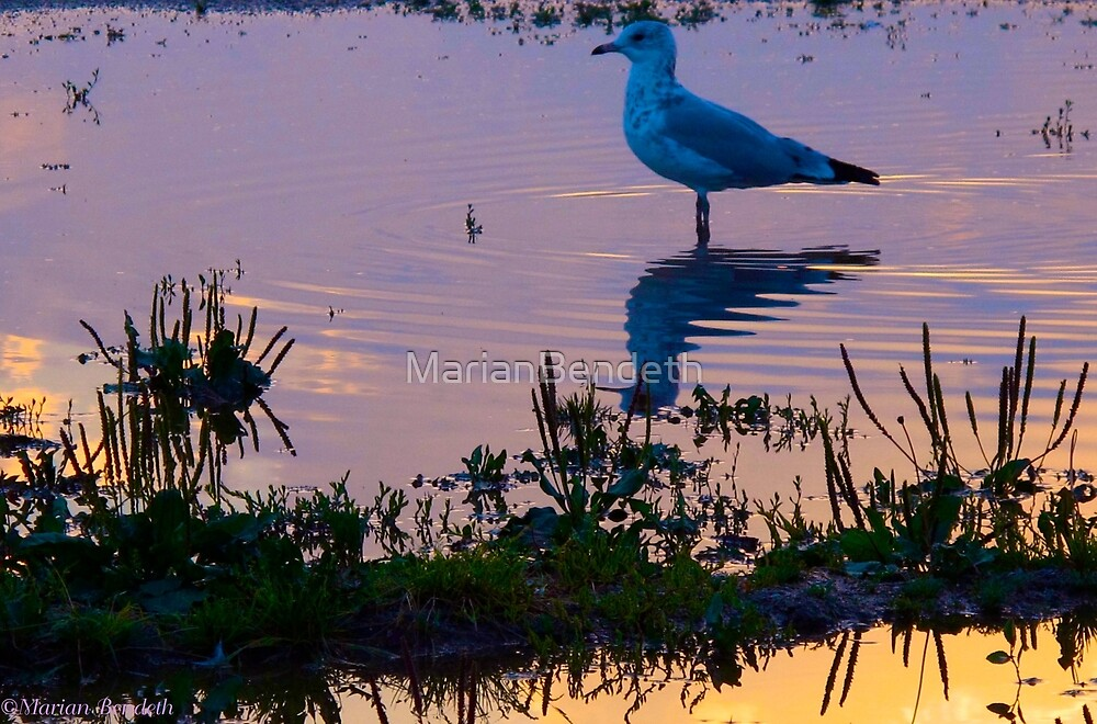 Contemplation by MarianBendeth