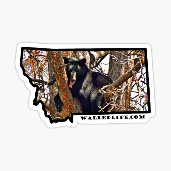 Montana Black Bear Sticker