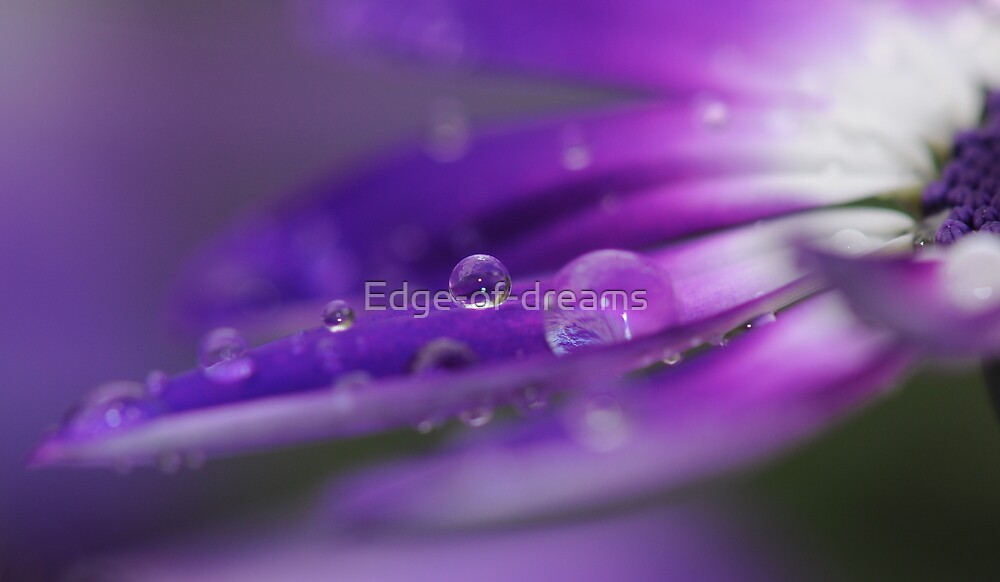 Purple Haze by Edge-of-dreams