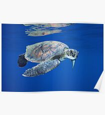 Reflections of a Turtle Poster