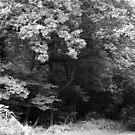wiltshire woods by Ursa Vogel