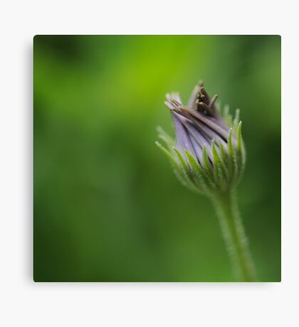 The Power of Simplicity Canvas Print