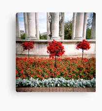 Three red bushes Canvas Print