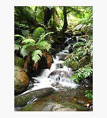 Cement Creek - Warburton, Victoria Photographic Print