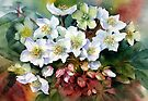 Christmas Hellebores by Ann Mortimer