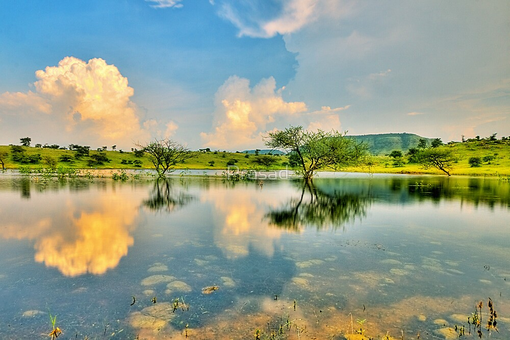 Reflections #2 by Prasad