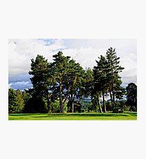 Tall Pines   Ballater Golf Course, Scotland. Photographic Print