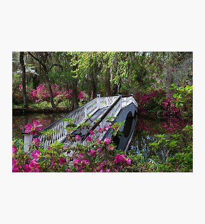 Bridge in Magnolia Plantations Garden Photographic Print
