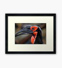 African Ground Hornbill Framed Print