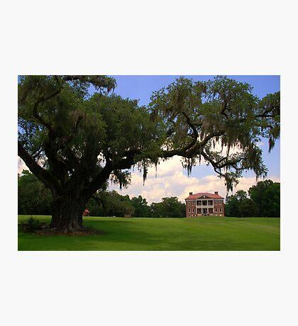 Drayton Hall Plantation, Charleston Photographic Print