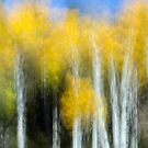 Aspens Doing Their Shimmery Dance by A.M. Ruttle