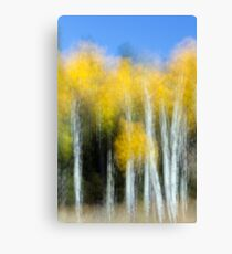 Aspens Doing Their Shimmery Dance Canvas Print
