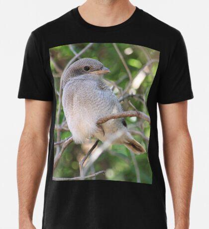 Fiscal Shrike Fledgling - One of four Premium T-Shirt