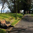 park bench, Cambridge, NZ by rmenaker