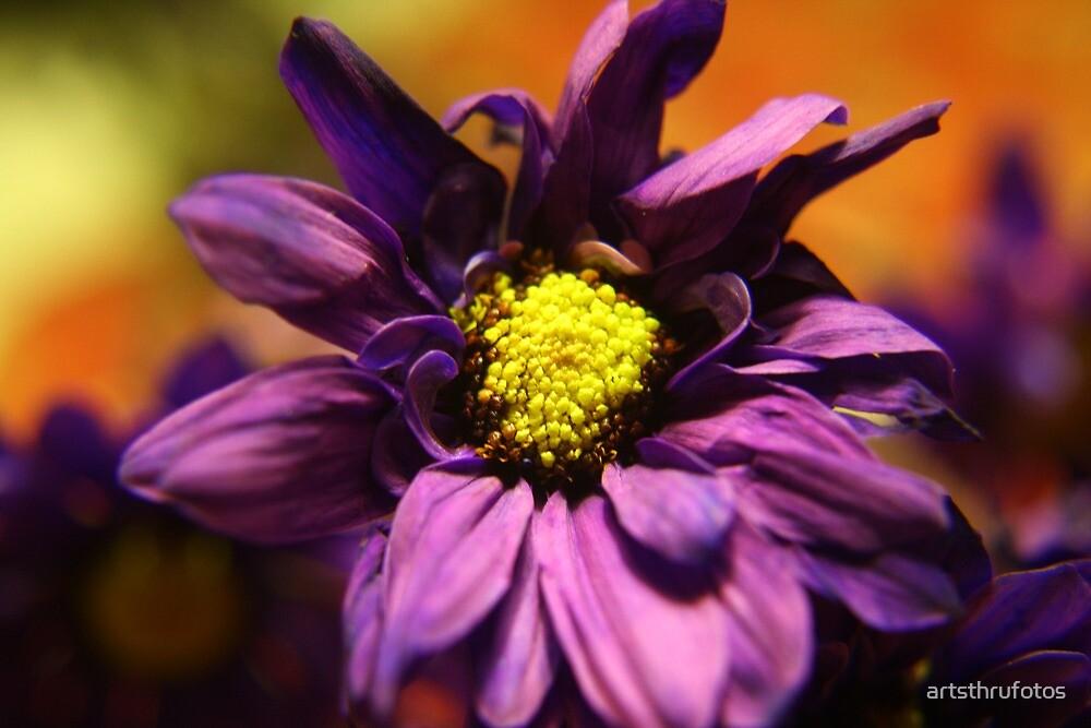 Purple by artsthrufotos