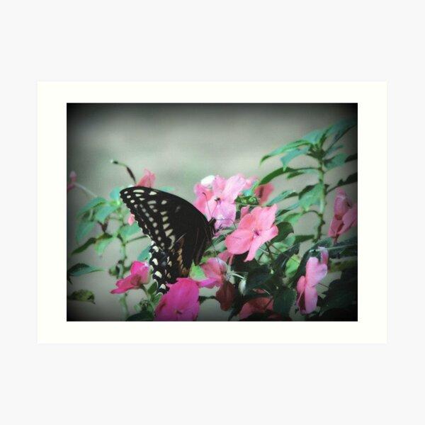 A Butterflies Life Art Print