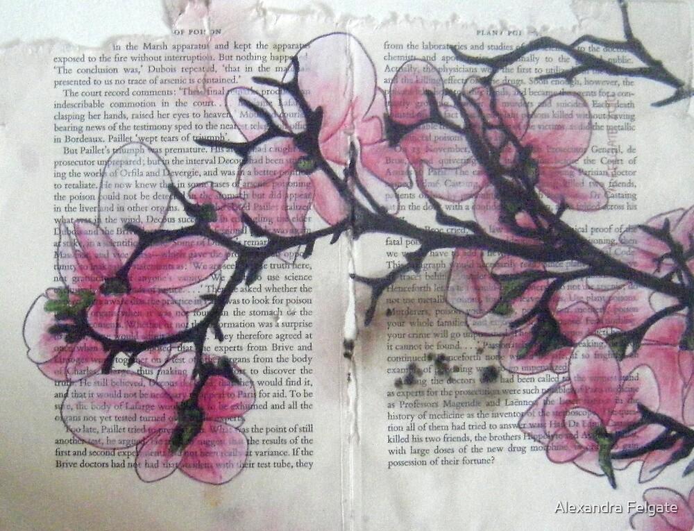 Magnolias III by Alexandra Felgate