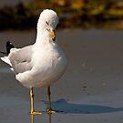 Downcast Gull by Jim Haley