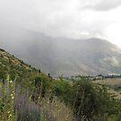 Misty View - New Zealand  by Louise Linossi Telfer