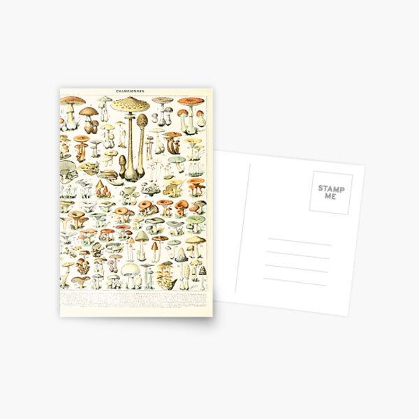 Adolphe Millot champignon B Postcard