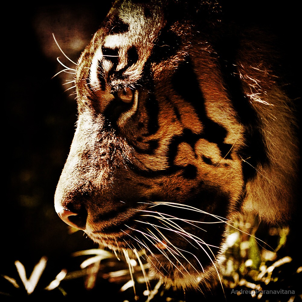 Absolute Focus by Andrew Paranavitana