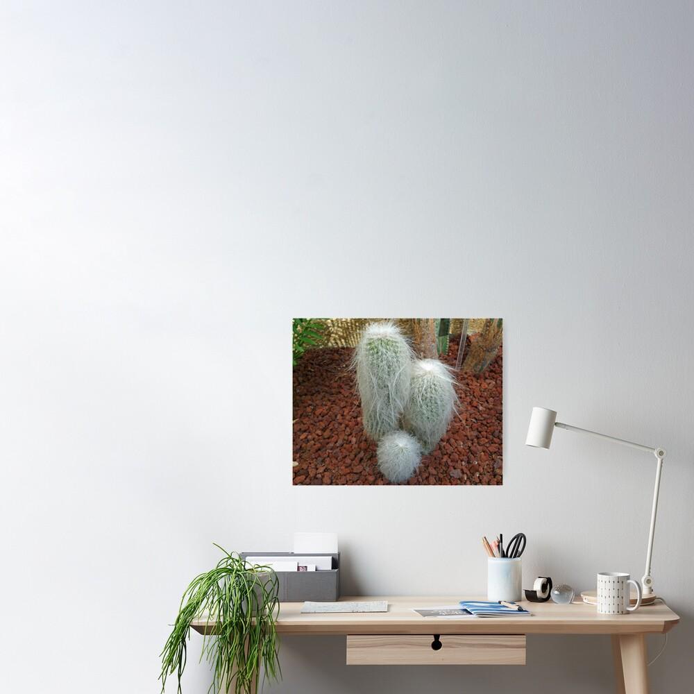 Old Man Cactus Poster