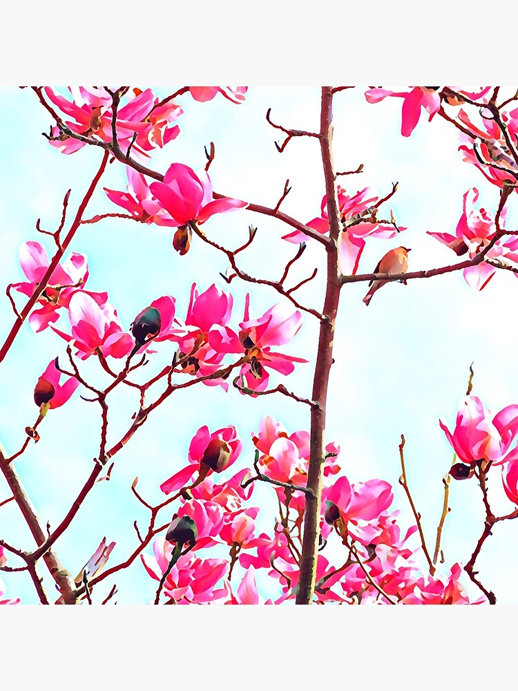 Magnificent Magnolia photo artwork by campbellhall