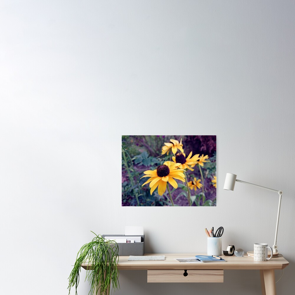 Gelber Sonnenhut Poster