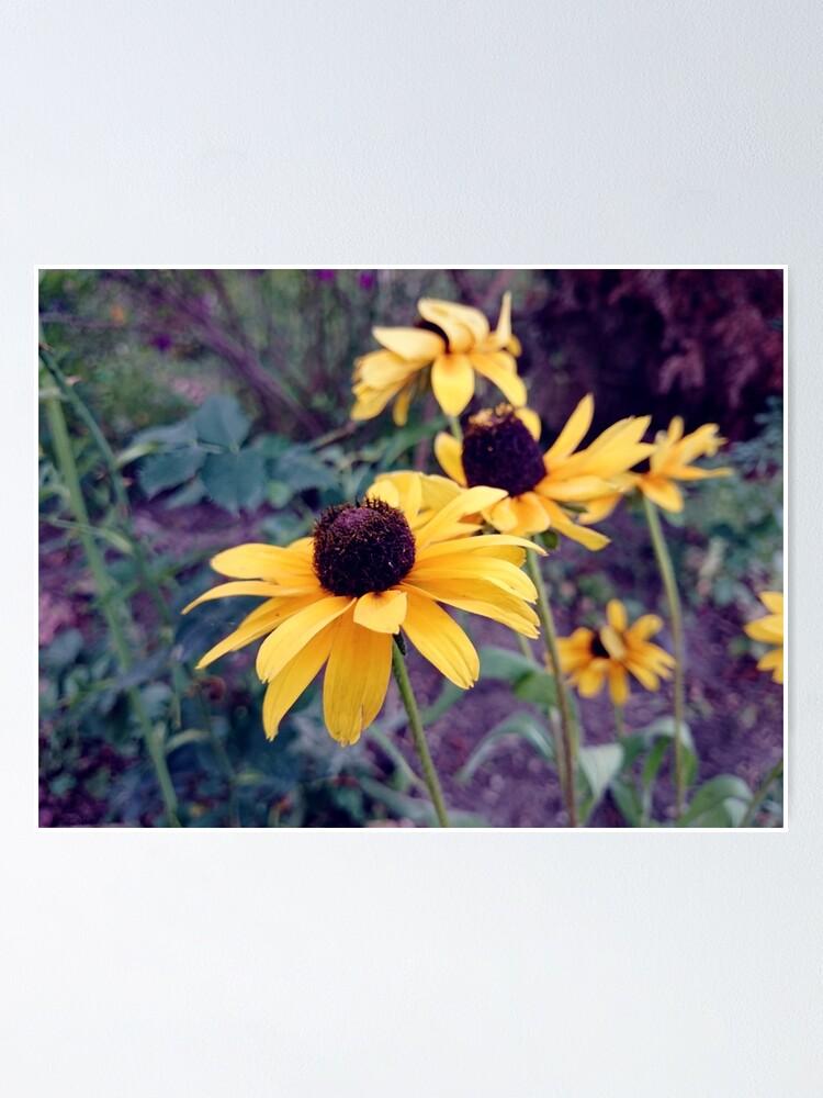 Alternative Ansicht von Gelber Sonnenhut Poster