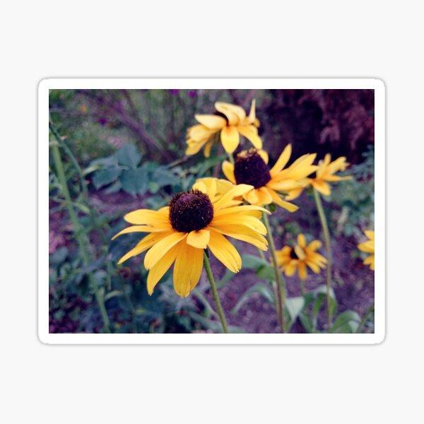 Gelber Sonnenhut Sticker