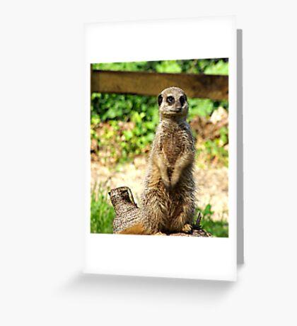 Meerkat Greeting Card
