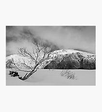 Resilient snow gum Photographic Print