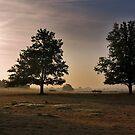 Trees in the Morning Sun by ienemien