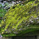 Mossy Stone by hans p olsen