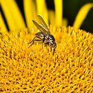 Pollen Traffic by Gareth Jones