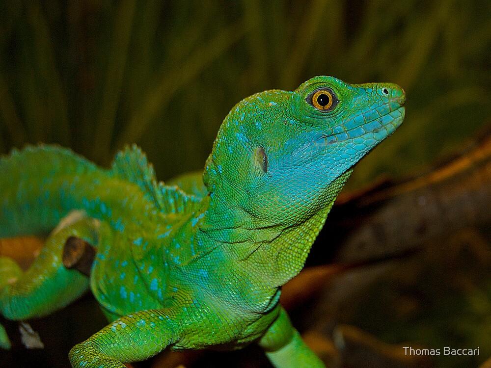 """U S Lizard """"Mr. Lizar..."""