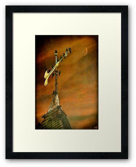 Steeple Starlings by Chris Lord