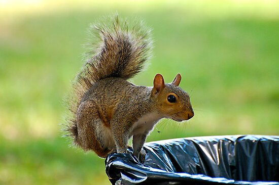 The Garbage Thief by TJ Baccari Photography