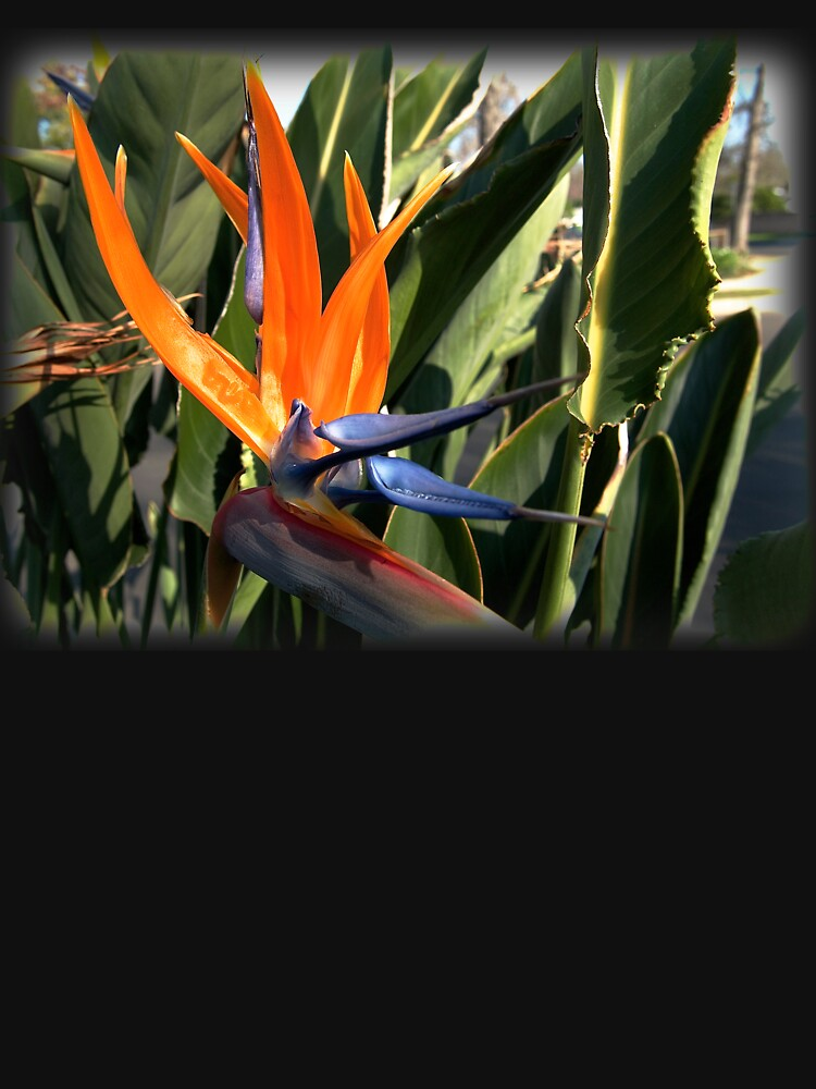 Bird of Paradise (Strelitzia) from A Gardener's Notebook by douglasewelch