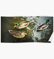 Mallards and Trout Poster