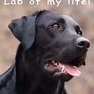 Lab of my life! by johnartist