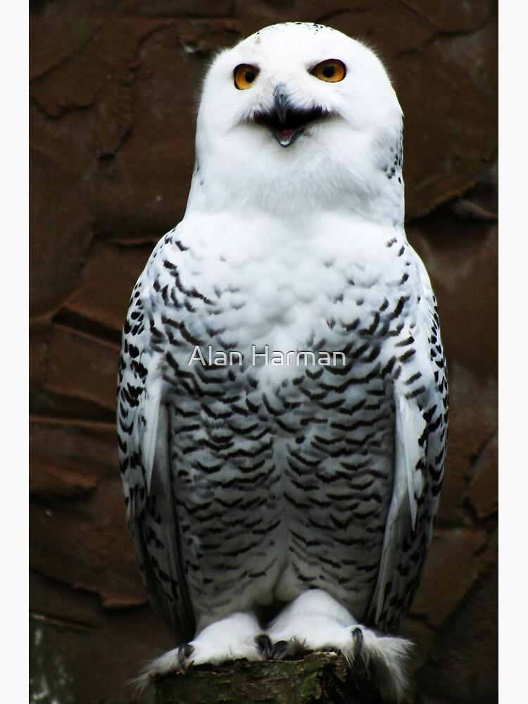Snowy Owl by AlanHarman