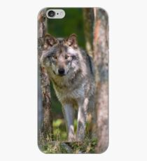 Timber wolf in Forest iPhone Case