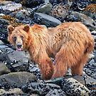 Bear Attitude. by Alex Preiss