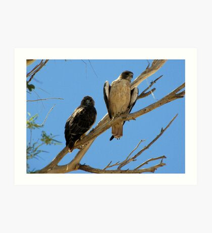 Red-tailed Hawks ~ Paired Art Print