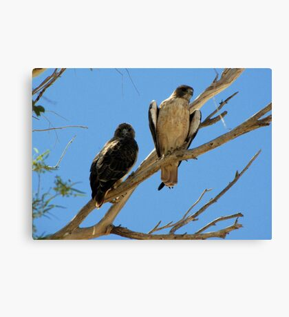 Red-tailed Hawks ~ Paired Canvas Print